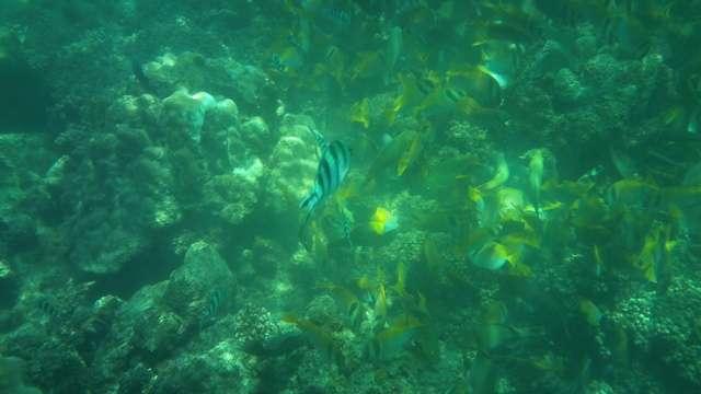 Fische unter Wasser